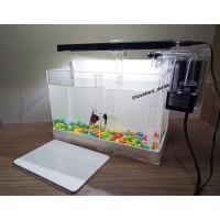 Mini Aquarium Akrilik, Aquarium mini Acrylic, Acrylic Aquarium lengkap