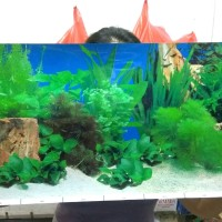 Wallpaper aquarium gambar belakang aquascape tinggi 40cm