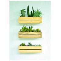 Pot Kayu Tempat Bunga Kaktus Dekorasi Dinding Gantung