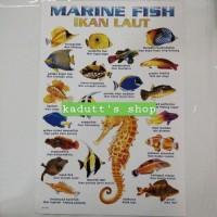 Poster Edukasi Jenis Nama Ikan Hewan Laut Marine Fish Mainan Murah