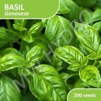 SILAHKAN DI ORDER Benih Basil Genovese Import - 200 Seed MURAH MERIAH