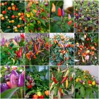 Benih Bibit Biji - PAket HEmat Cabe Cabai Rainbow Pepper - BEBAS PIL
