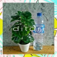 Promo Daun Monstera Daun Plastik Palsu Bunga Plastik Dekorasi Termurah