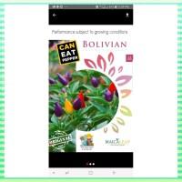 GROSIR 1 PACK BENIH TANAMAN CABE PELANGI BOLIVIAN RAINBOW EXOTIC