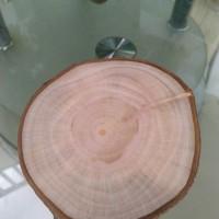 Wood slice diameter 10-12 cm talenan tatakan bahan dekorasi rustic