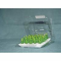 Miniatur Cemara Kepyur tinggi 2 cm/ Maket pohon cemara kepyur