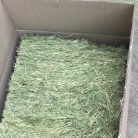 makanan kelinci hay/rumput kering/jerami merk TimotyKing reapack 100gm