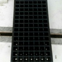 Tray Semai Pot Semai Seedling Tray Pot Tray Bibit 105 Hole