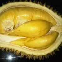 bibit durian Montong siap berbunga