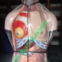 model torso wanita 90cm