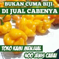 Buah Cabai TRINIDAD SCORPIO YELLOW Benih Bibit Biji Pod Cabe Tanaman