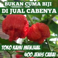 Buah Cabai TRINIDAD SCORPIO RED Benih Bibit Biji Pod Cabe Tanaman