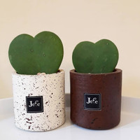 Cactus Hoya Love Stone Vase Tanaman Kaktus Berbentuk Love Dalam Pot