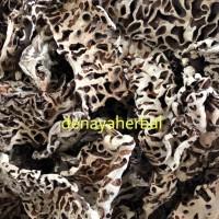 Herbal Sarang Semut Putih ( Herbal Asli Sorong Papua )