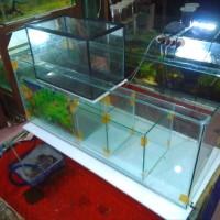 Aquarium ikan Hias dan perlengkapan Aquarium