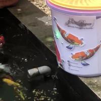 Alat Pemberi Makan Ikan Otomatis tanpa wifi hanya timer saja