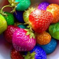 ready (isi 100bh) Benih strawberry Rainbow / Bibit Strawbeery Pelangi