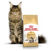 ROYAL CANIN MAINE COON ADULT 4KG-makanan kucing dewasa mainecoon