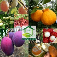paket 3 bibit tanaman buah