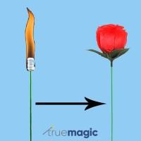 Torch to Rose (Alat Sulap Bunga Mawar Api)