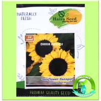 Benih Bibit Bunga Matahari Sunflower Sunspot Haira Seed 10 Butir