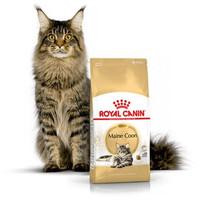 ROYAL CANIN MAINE COON ADULT 4KG-makanan kering kucing dewasa