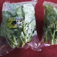kailan sayur bebas pestisida