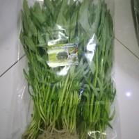 kangkung hidroponic