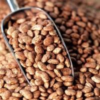 Organic Pinto Beans / Kacang Pinto Organik 250 Gram