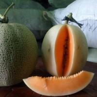 Benih Melon Kirani - Bibit Melon Kulit Putih Daging Orange SUPER MANIS