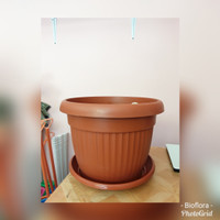 Pot Plastik Claris 5835 merah Bata plus tatakan