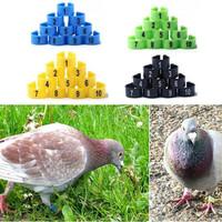 ring burung model klip plastik untuk merpati dara ayam bebek 6mm