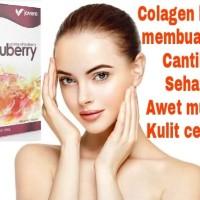 Info Jovem Gluberry Katalog.or.id