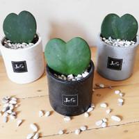 Hoya Love Cacti / Kaktus Love / Tanaman Hias
