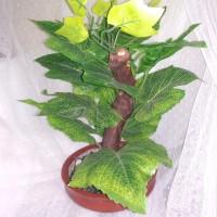 bonsai daun anggur artifical 403