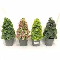 Pot hias pohon cemara plastik murah import pajangan dekorasi rumah
