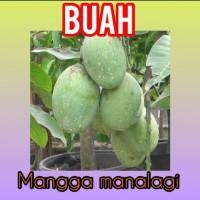 Buah Mangga Manalagi / Lalijiwo 1 kg