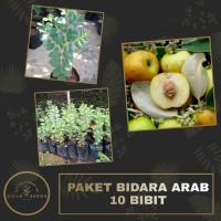 Paket Bidara Arab 10 Bibit Murah