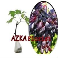 Terbaik. Bibit Tanaman Buah Anggur Import Souvenir