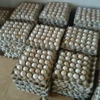 Telur ayam kampung / telor ayam kampung