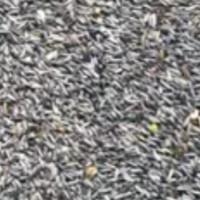 niger seed biji niger 500 gr