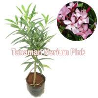 Tanaman Nerium Pink