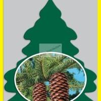 parfum mobil little trees royal pine