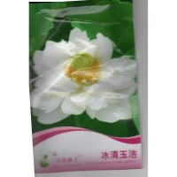 (4 Biji) Bunga Lotus Teratai Putih (B0209)