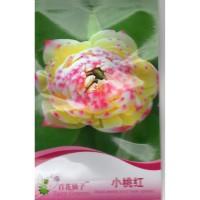 (4 Biji) Bunga Lotus Teratai Gold Philipines (B0214)