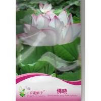 (4 Biji) Bunga Lotus Teratai Putih Pink (B0210)