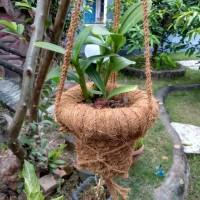 Pot gantung pot serabut kelapa sabut kelapa pot anggrek