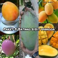 paket 5 batang bibit buah mangga