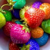on sale (isi 100bh) Benih strawberry Rainbow / Bibit Strawbeery