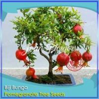 Bibit Tanaman Buah Bonsai Delima Mini Pomegranate Tree Benih Tanaman